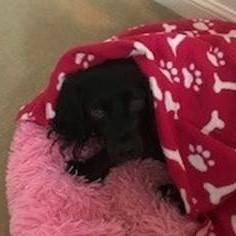 Tracy's dog, Bernadette